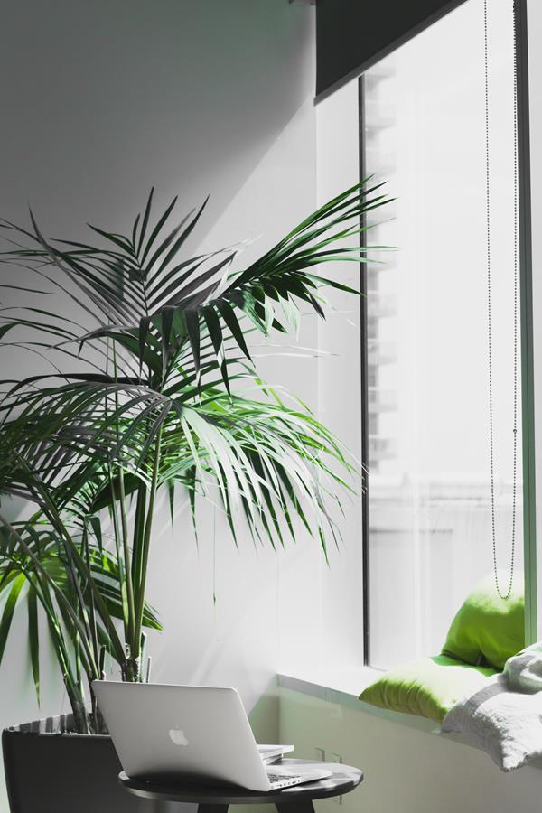 Em escritórios as plantas ajudam na purificação do ar e na harmonização do ambiente de trabalho.