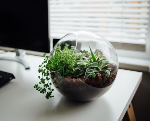 Plantas para escritórios - Feng Shui.