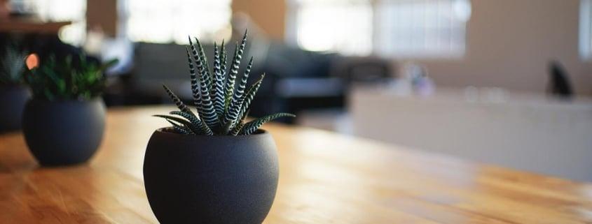 Plantas pequenas para escritórios.